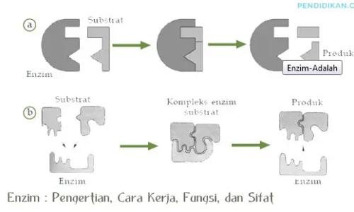 pengertian-enzim